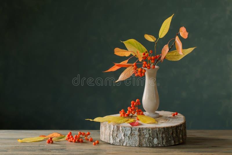 Натюрморт с ягодами рябины на темной предпосылке стоковое фото