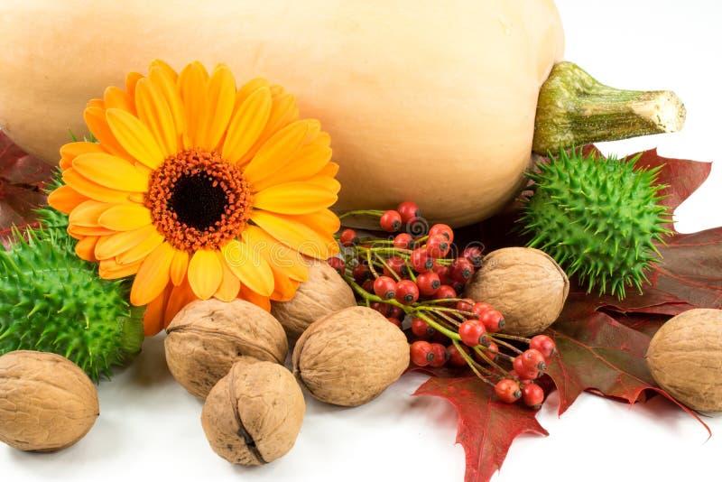 Натюрморт: тыква, грецкий орех, розовое бедро, цветок, листья, thornapple стоковое изображение rf