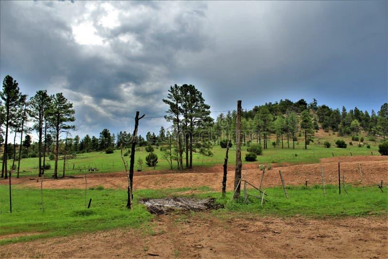 Национальный лес апаша-Sitgreaves, Аризона, Соединенные Штаты стоковые фотографии rf