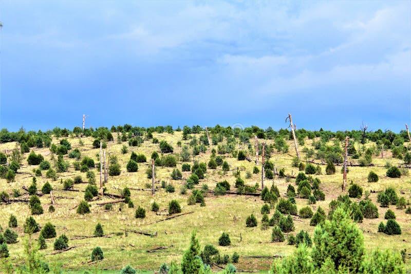Национальный лес апаша-Sitgreaves, дорога Управления лесным хозяйством 51, Аризона, Соединенные Штаты стоковые изображения
