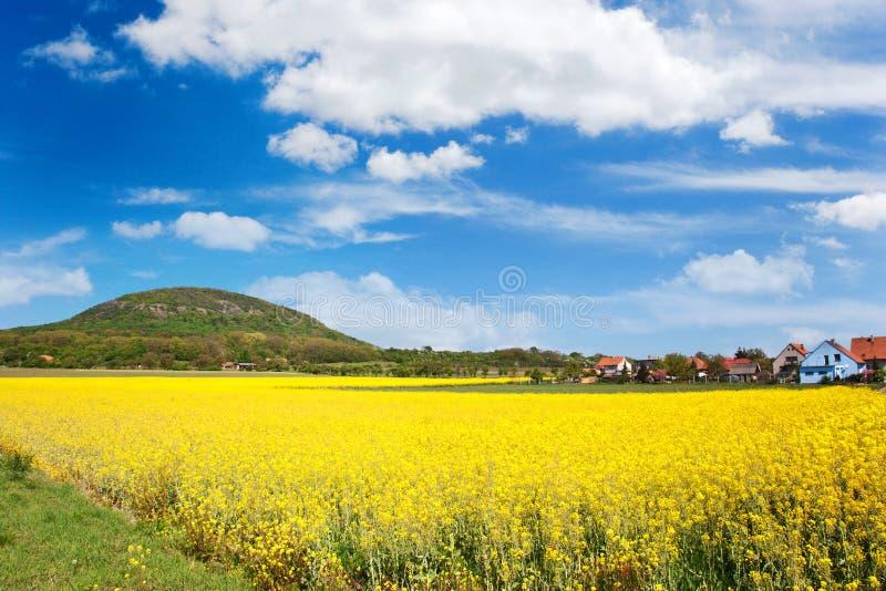 Национальный мистический сулой холма, центральная Богемия, чехия - поле сурепки на весеннем времени стоковые изображения