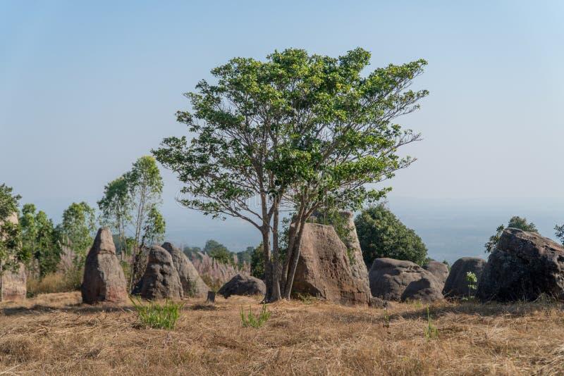 национальный парк в Таиланде, дереве и большом камне в лесе стоковое изображение