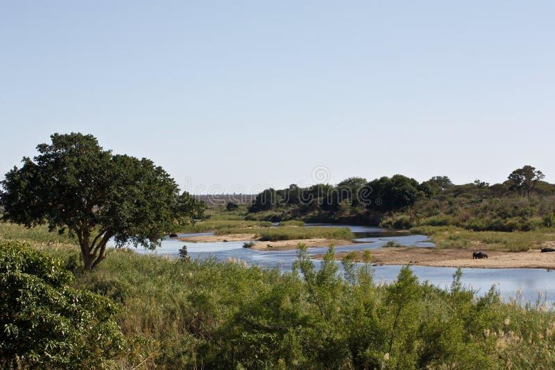 национальный парк ландшафта kruger стоковые изображения