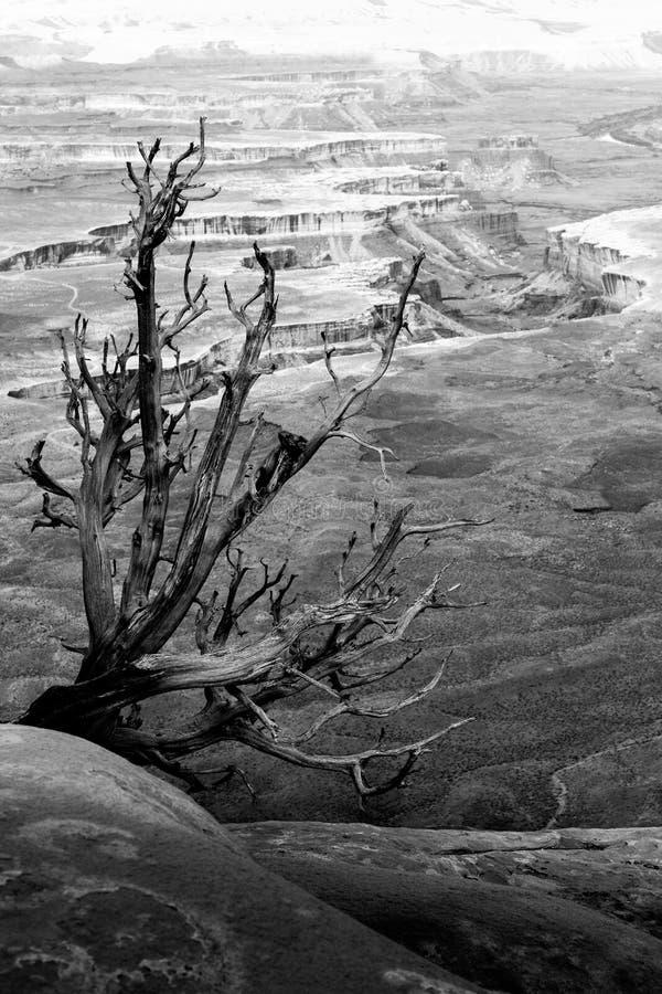 Национальный парк Canyonlands стоковое изображение rf