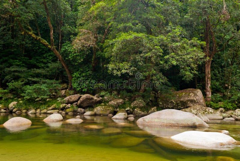 национальный парк gorge daintree mossman стоковое фото