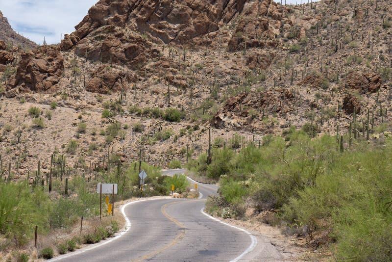 Национальный парк Saguaro - дорога пропуска стробов стоковые изображения