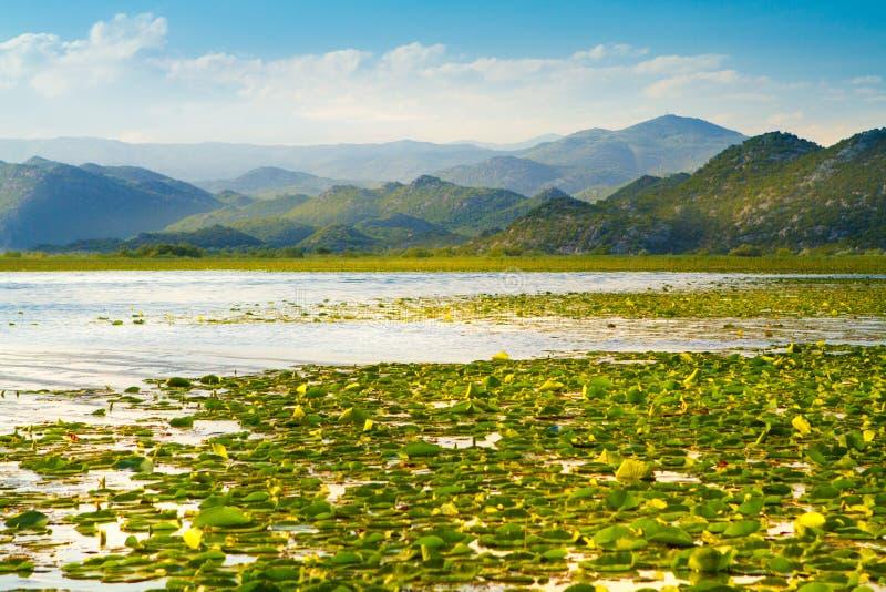 Национальный парк Skadar озера на Черногории стоковые фото
