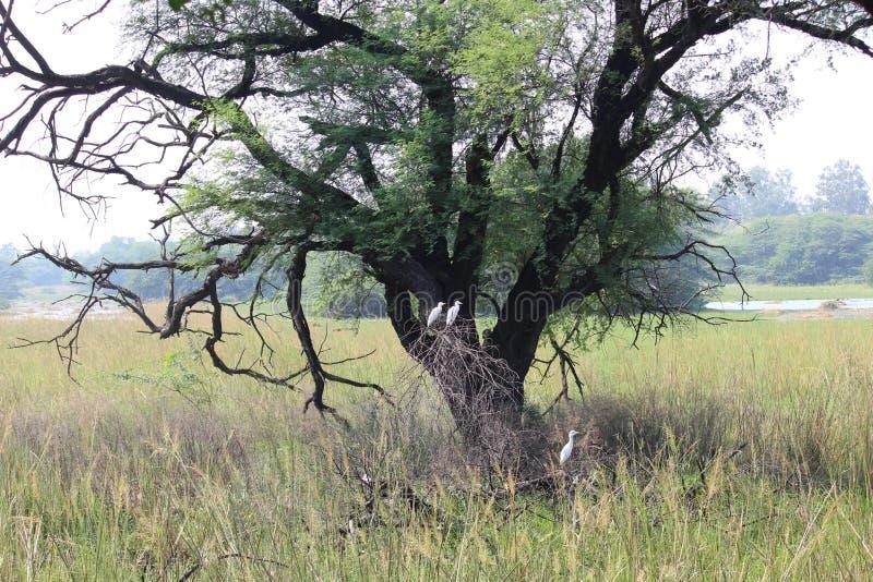 Национальный парк Sultanpur стоковые фото
