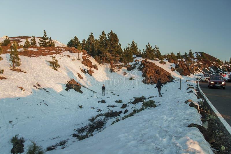 Национальный парк Teide, Тенерифе, Испания - 26-ое февраля 2016 Время захода солнца, зима леса сосны на горах Тенерифе, покрытых  стоковое изображение rf