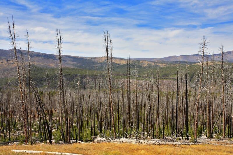 национальный парк yellowstone осени стоковая фотография rf