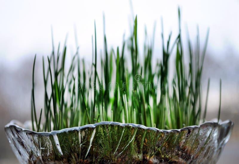 Национальная таможня для того чтобы настроить зерно для рождества окном обозревая дерево стоковые изображения rf