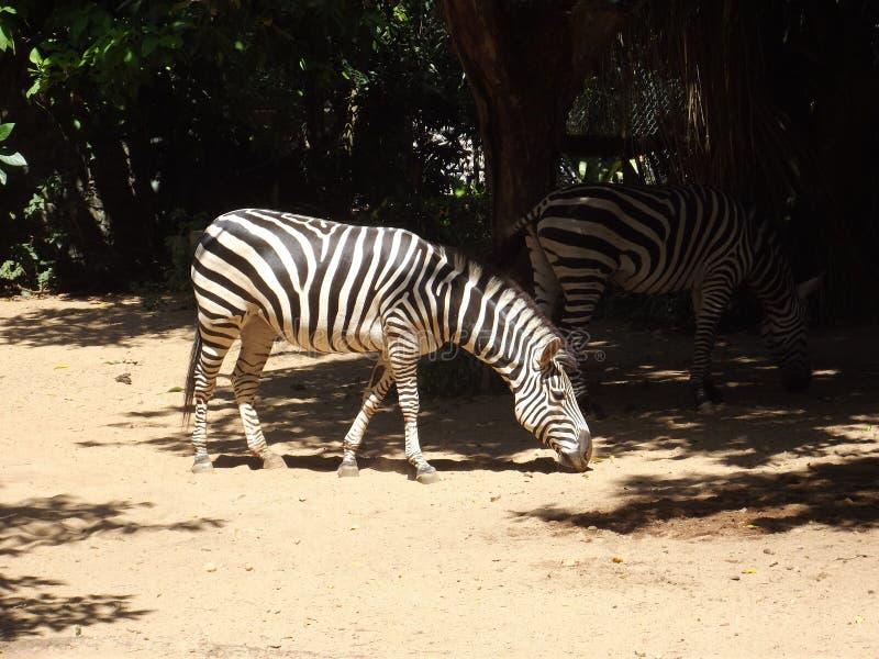 Национальное животное зоопарка стоковое фото