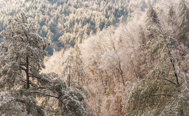 Национальный лес Chattahoochee стоковое изображение rf