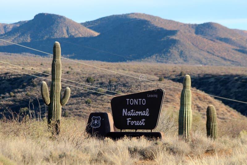Национальный лес Tonto, Аризона стоковые фотографии rf