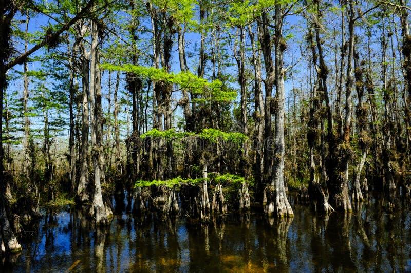 Национальный парк болотистых низменностей стоковые фото