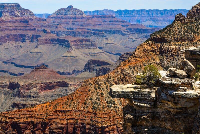 Национальный парк грандиозного каньона стоковое фото rf