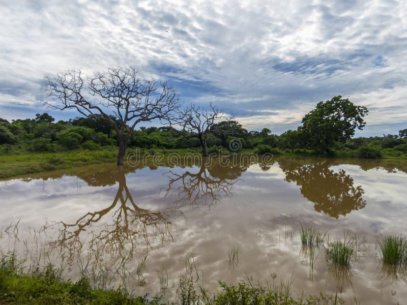Национальный парк Ейль в Шри-Ланка стоковые изображения