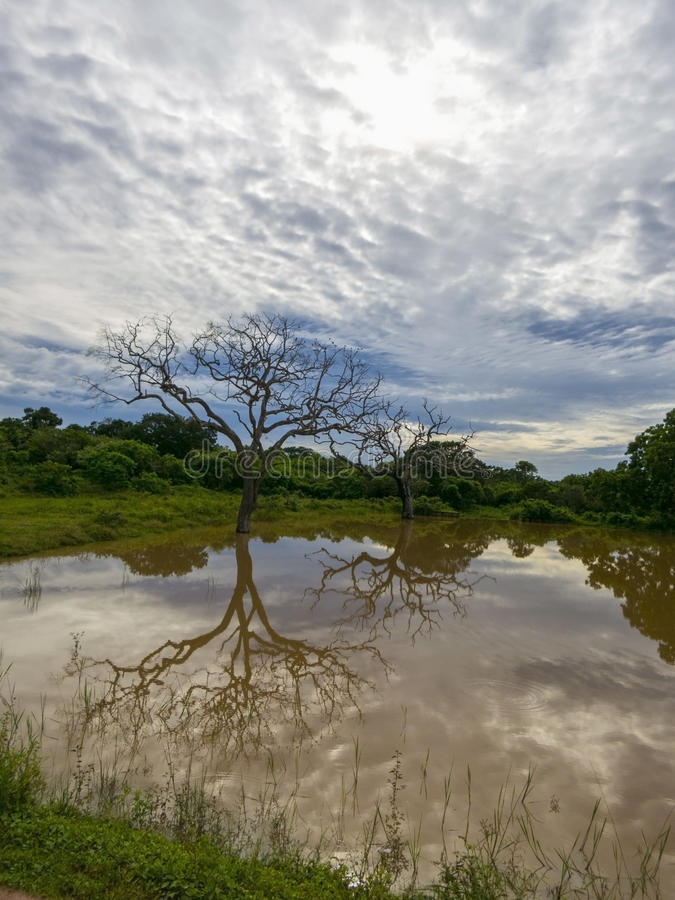 Национальный парк Ейль в Шри-Ланка стоковое фото