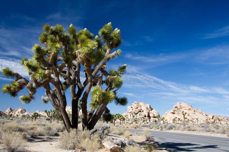 Национальный парк дерева Иешуа стоковые фото