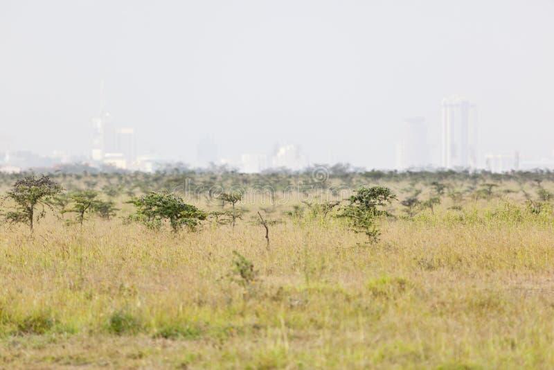 Национальный парк Найроби стоковая фотография rf