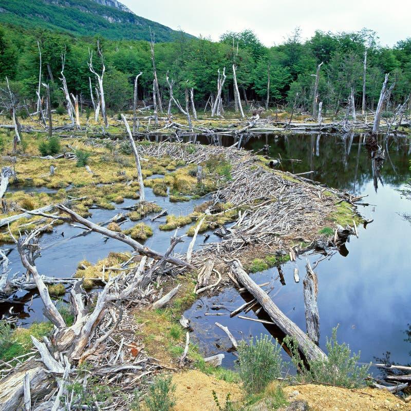 Национальный парк Огненной Земли, Аргентина стоковое изображение