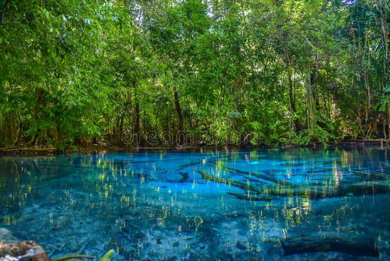 Национальный парк дождевого леса в Sra Morakot, krabi Таиланде стоковые изображения