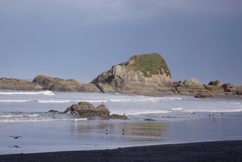 Национальный парк пляжа #4 олимпийский стоковые изображения