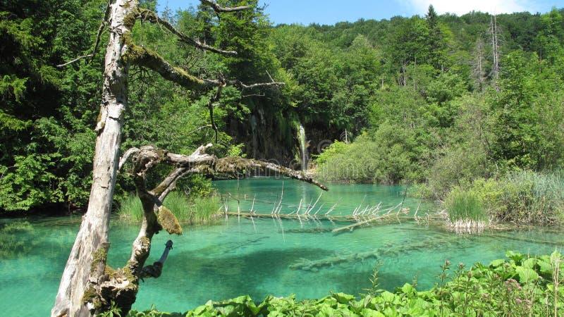 Национальный парк Хорватии, озер Plitvice (2011) [5] стоковая фотография rf