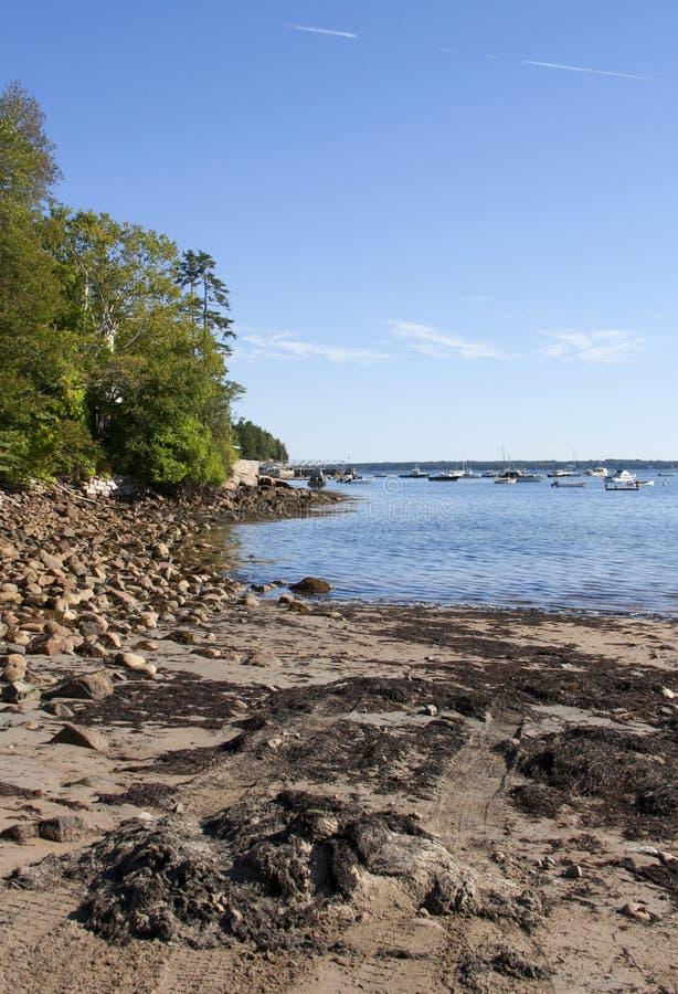 Национальный парк 40 Acadia стоковые изображения rf