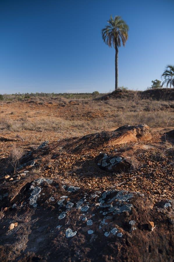 Национальный парк El palmar стоковая фотография rf