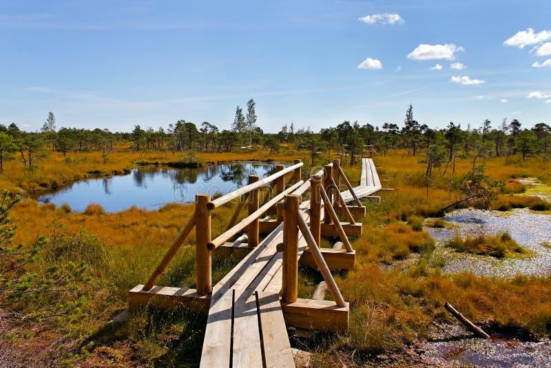 Национальный парк Kemeri. стоковое фото