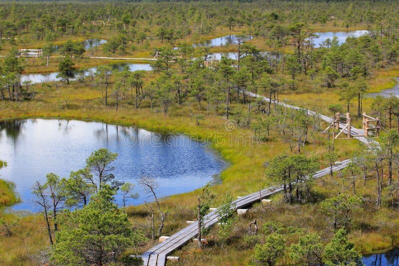 Национальный парк Kemeri стоковые изображения rf