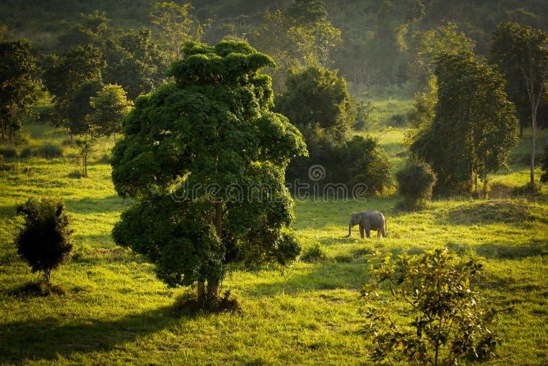 Национальный парк Kuiburi стоковые фотографии rf