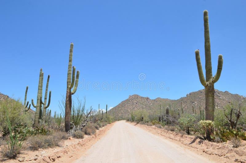 Национальный парк Saguaro, Аризона, США стоковые изображения rf