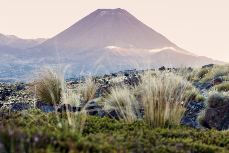 Национальный парк Tongariro стоковые изображения