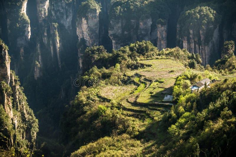 Национальный парк Zhangjiajie стоковое изображение rf