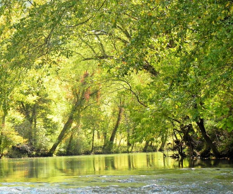 Национальный река буйвола стоковое фото rf
