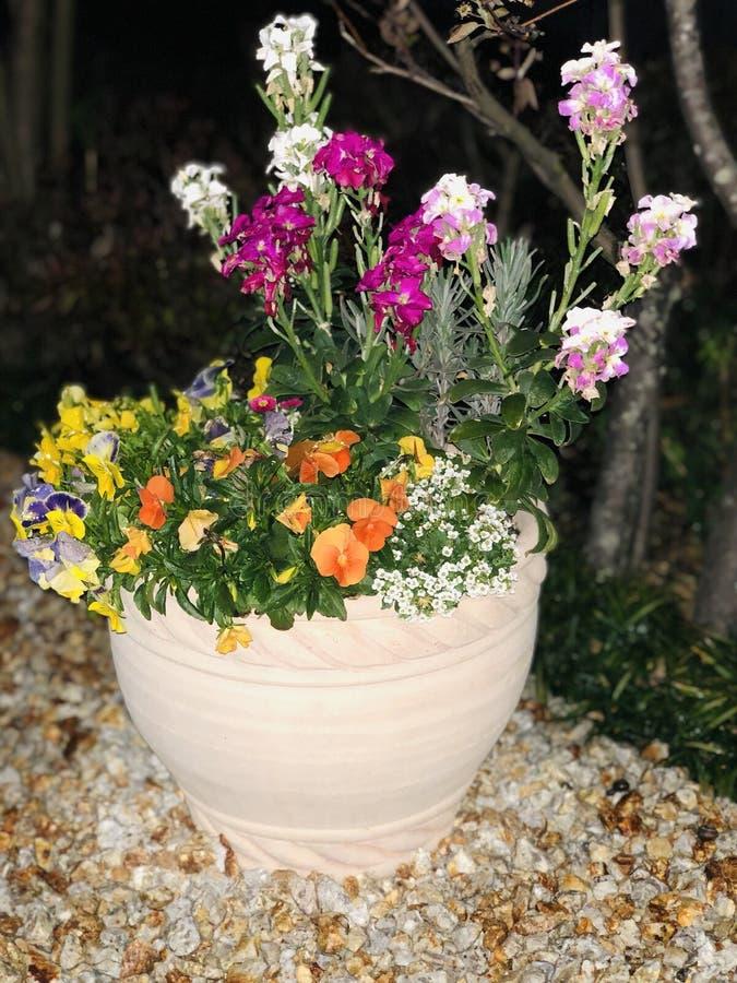Японские цветки стоковые фотографии rf