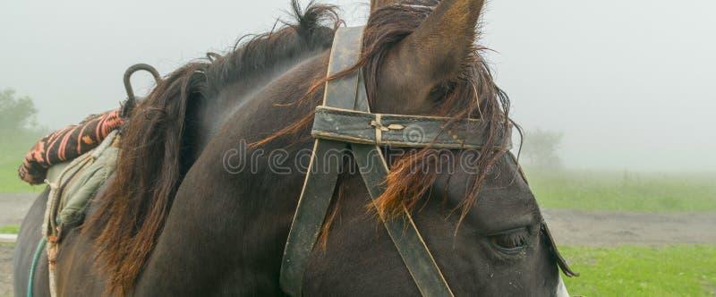 На верхней части горы лошадь стоковое фото