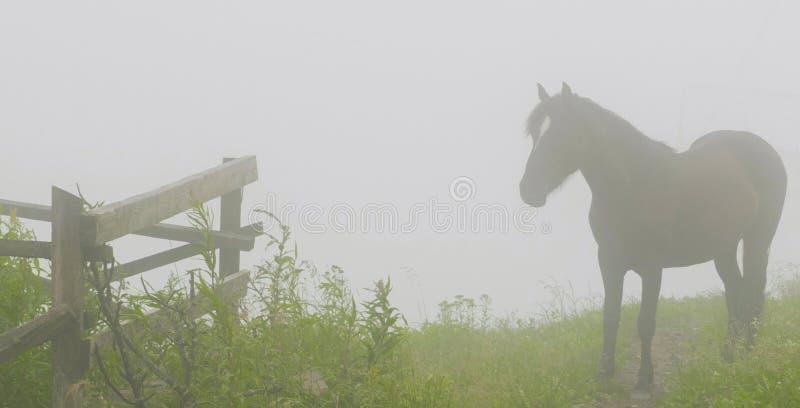На верхней части горы лошадь стоковое изображение