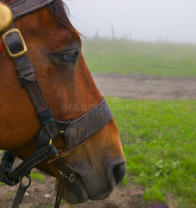 На верхней части горы лошадь стоковые фото
