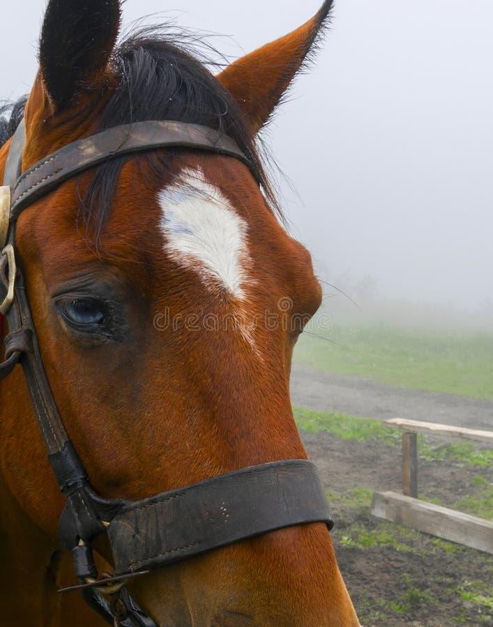 На верхней части горы лошадь стоковое изображение rf