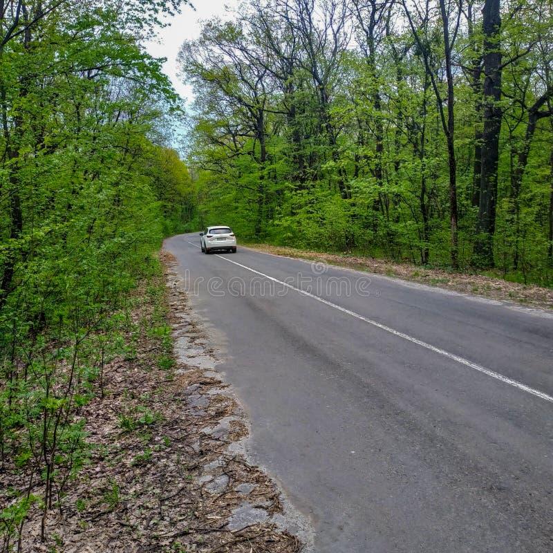 На дороге леса автомобиль управляет прочь стоковое изображение rf
