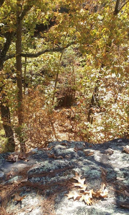 Над деревьями стоковая фотография
