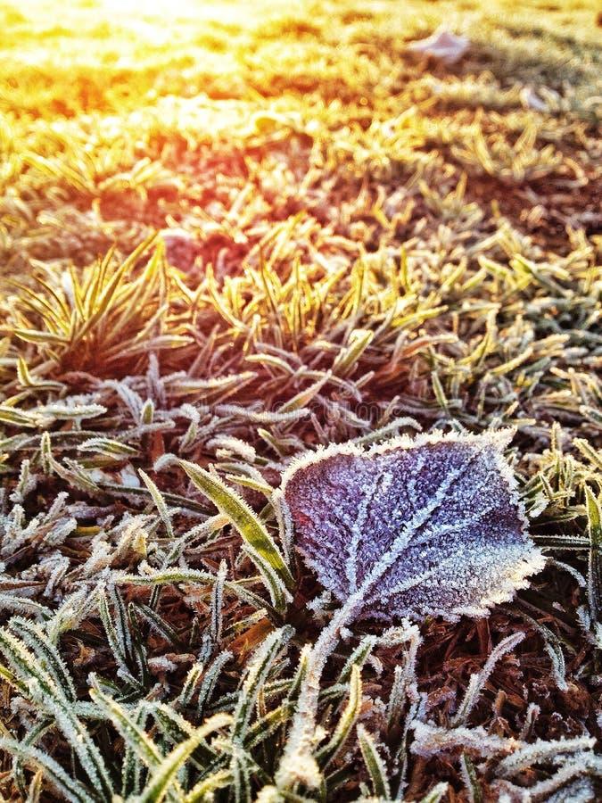 Налет инея зимы стоковое изображение