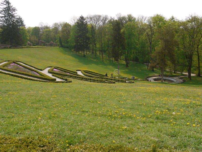 На зеленых наклонах парка с растущими маргаритками обнаружьте местонахождение красивому виду декоративной диаграммы кустов стоковая фотография