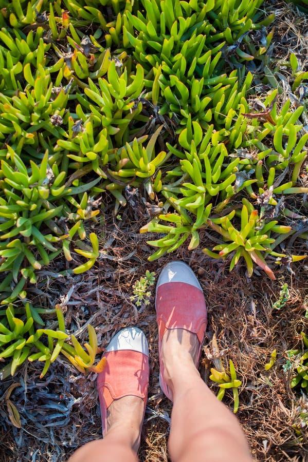 Надземное фото ног на предпосылке экзотических заводов Взгляд ног женщин сверху Исследовать, путешествующ, туризм, отдых стоковое фото