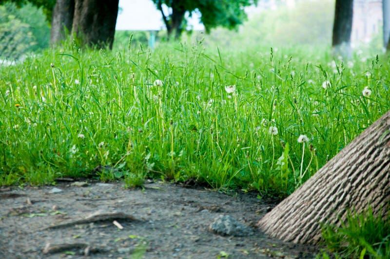На летний день, яркая ая-зелен трава растет на лужайке стоковые фото