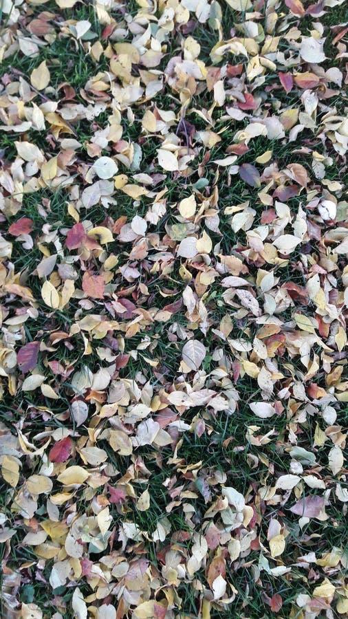 На осень единственные листья нет достаточно стоковые изображения rf