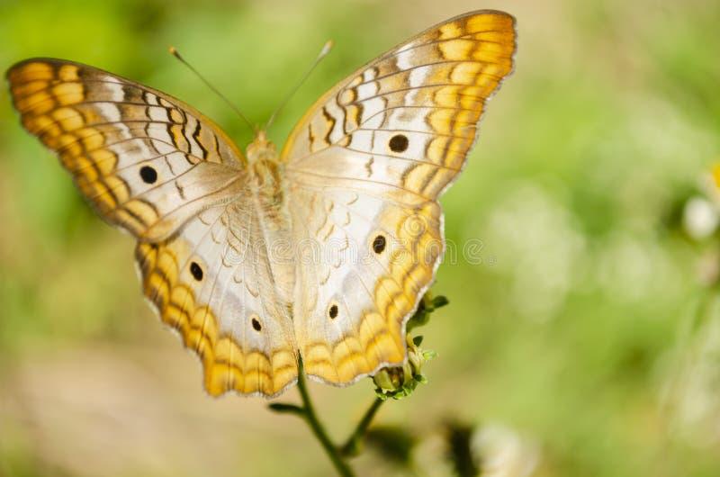 На открытом воздухе бабочка стоковые фотографии rf